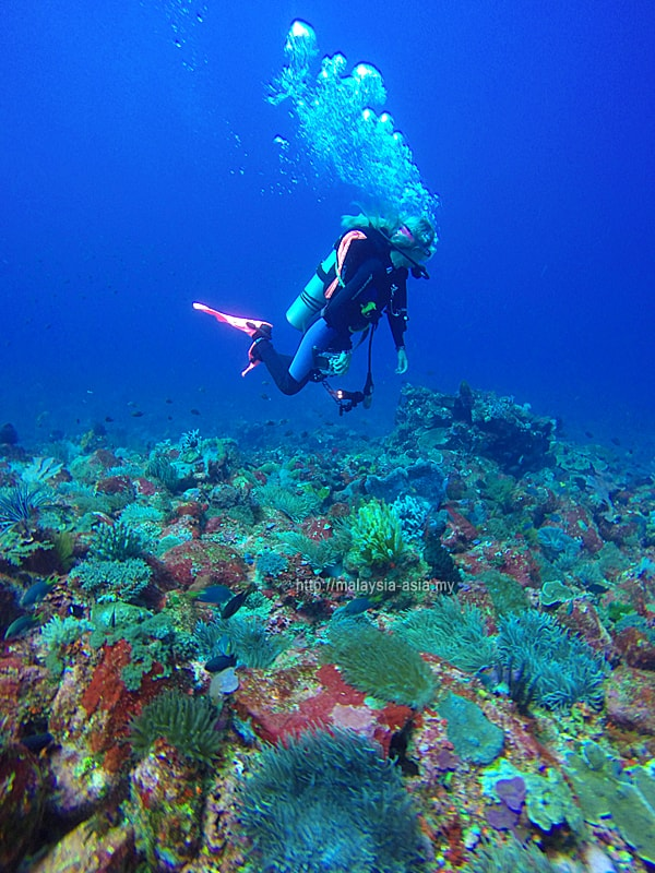 Alor Island Diving
