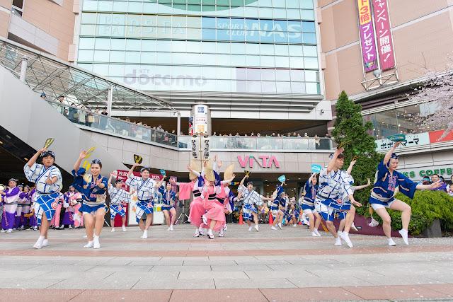 せいせき桜まつり、さくら広場にて阿波踊りを踊るひょっとこ連の写真