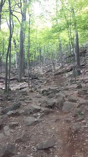 Sentier Rocky bleu, mont Saint-Hilaire, trail, roches, arbres