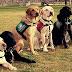 O projeto que criou a Central de treinamento para cão-guia no Estado de São Paulo