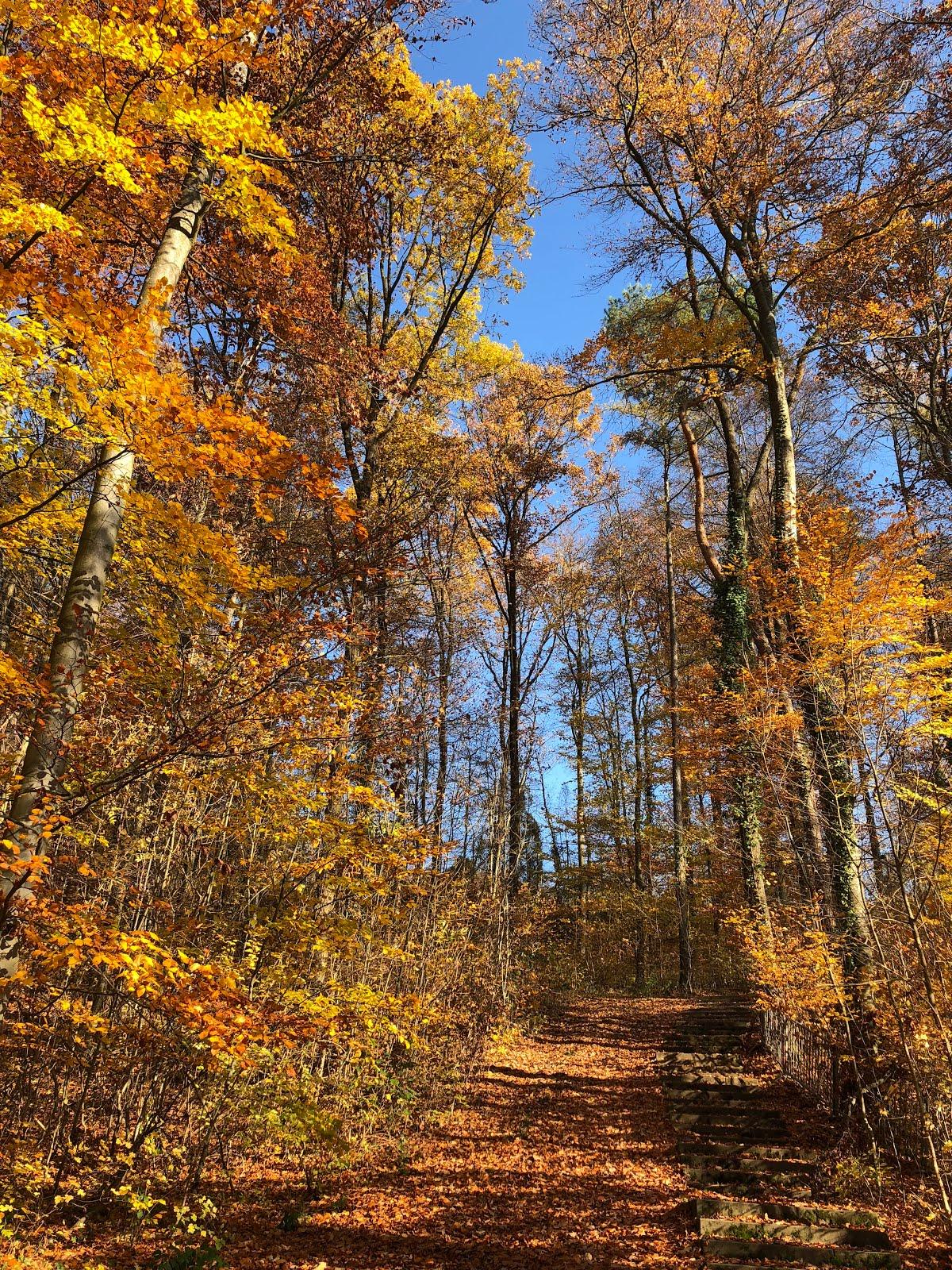 Großer Wald in Hoffenheim im Herbst