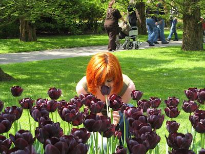 Чорні тюльпани