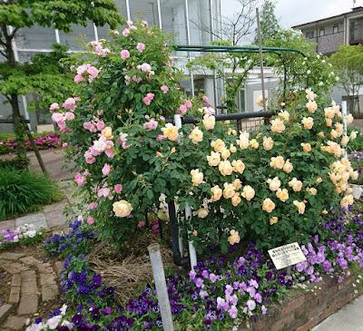 薔薇(2)