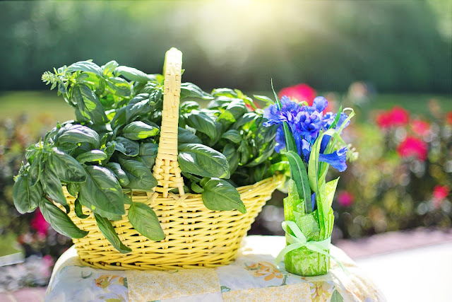 The Best Aromatic Plants for Your Summer Garden - Basil