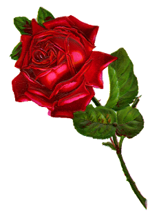 rose digital clip art