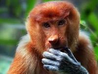 KEUNIKAN TUMBUHAN DAN HEWAN KHAS INDONESIA BIOLOGI KELAS X SMA MA