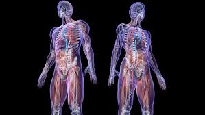 Human Body Facts in Hindi