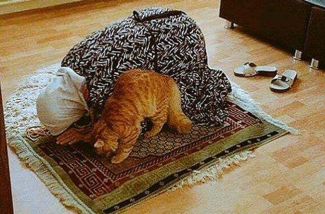 Subhanallah, Kucing Ini Pun Juga Ikut Shalat Berjamaah Dengan Tuannya