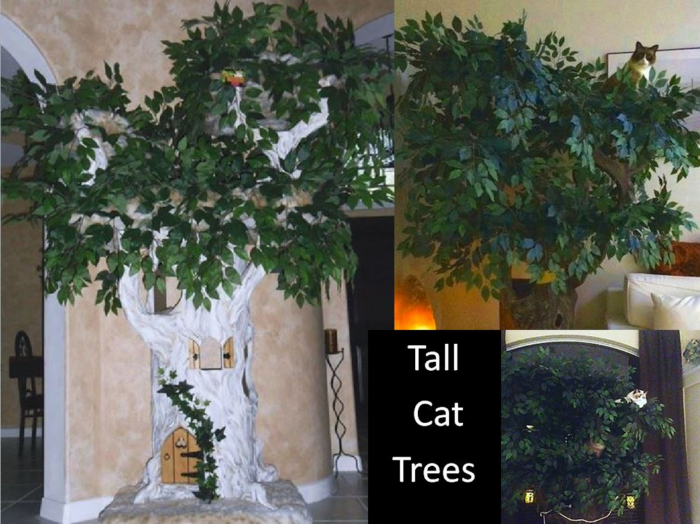 Tall Cat Furniture