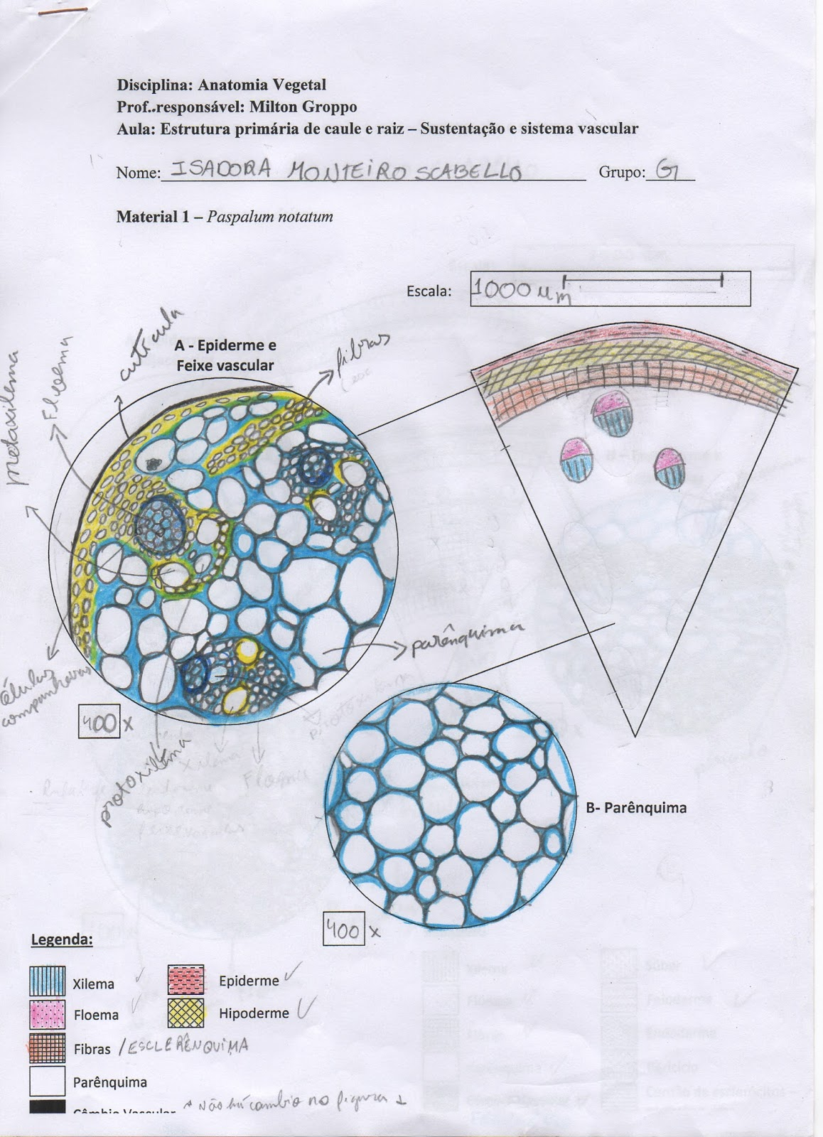 Laboratório de Sistemática de Plantas (Laboratory of Plant ...