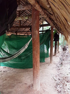 A roiw of hammocks under a thatched roof