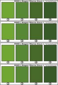 All about GREEN macam macam warna hijau