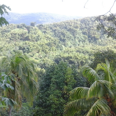 View of a hill from Portland, Jamaica