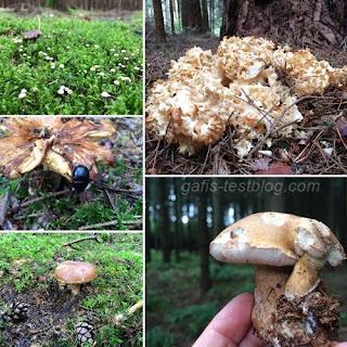 Pilze so weit das Auge reicht. ;)