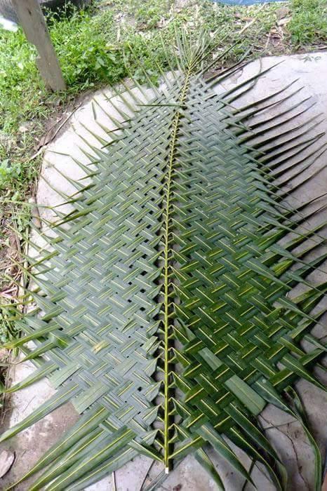 Membuat anyaman dari janur / daun kelapa | Kumpulan Kreasi
