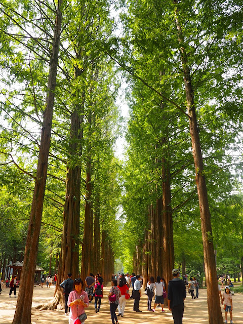 Tree lined path on Namiseom Island, Gapyeong, South Korea