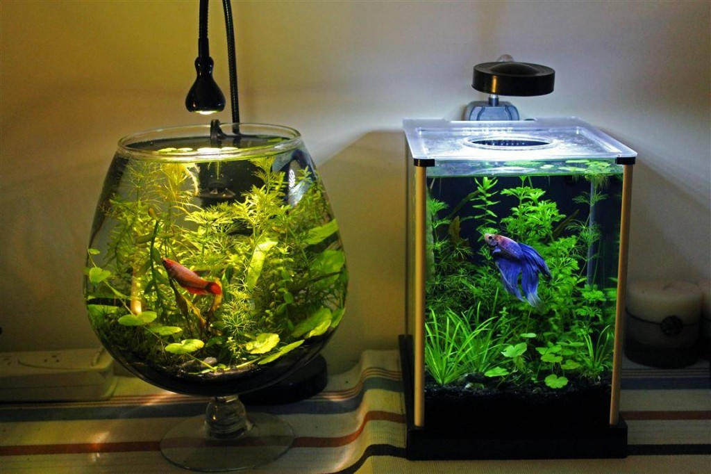 Betta fish tank setup ideas that make a statement for Betta fish bowl ideas