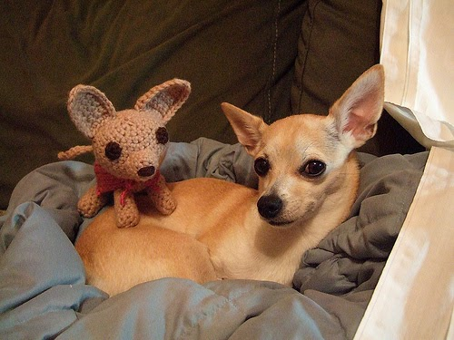 25 Cute Pets with Stuffed Animals of Themselves | Amazing ...