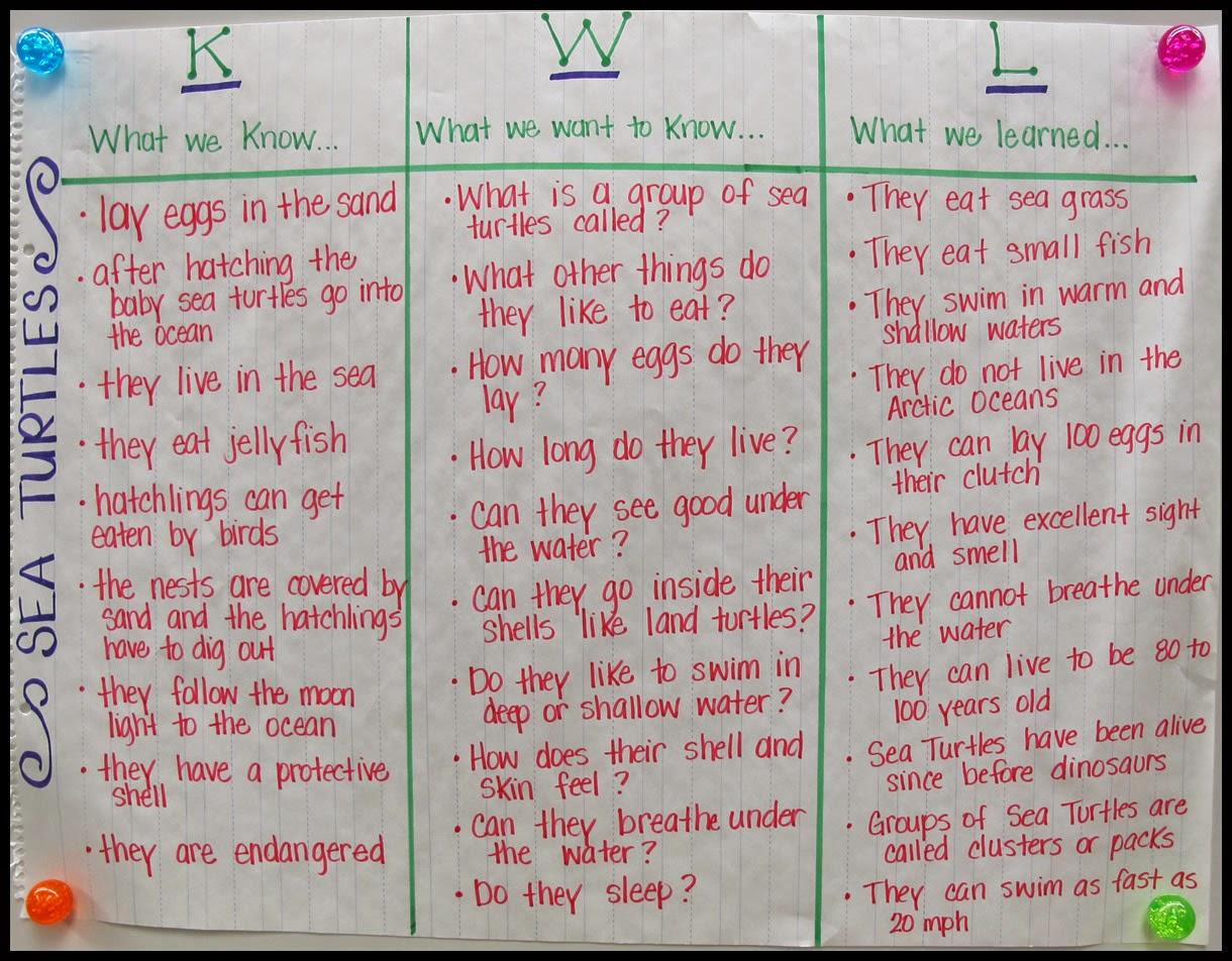 Kearson S Classroom All About Sea Turtles