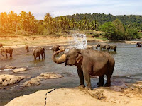 Indian Wildlife and 38 Cultural Tour
