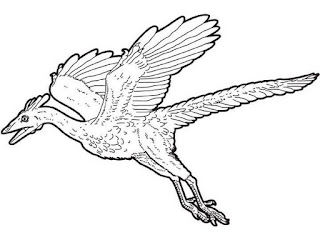 Archaeopteryx Coloring Sheet For Kids