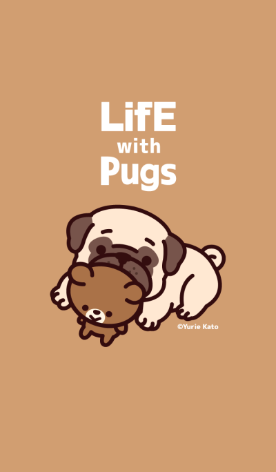 Life with pugs