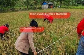 Survey Hasil Panen dengan alat ubinan padi