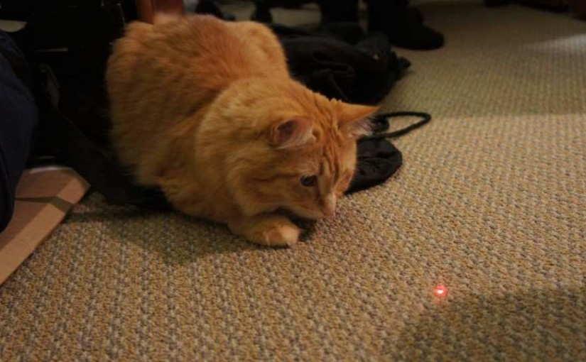 Ini Alasan Mengapa Kucing Sangat Tertarik dengan Pointer Sinar Laser