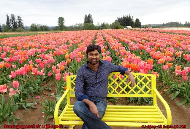 Woodburn Tulip Festival Near Portland