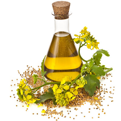 Kandungan Nutrisi dan manfaat minyak Canola