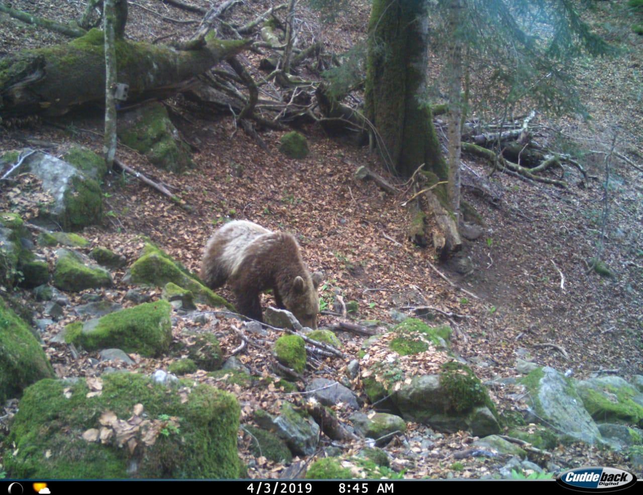 izlazi s vašim lukom za medvjede