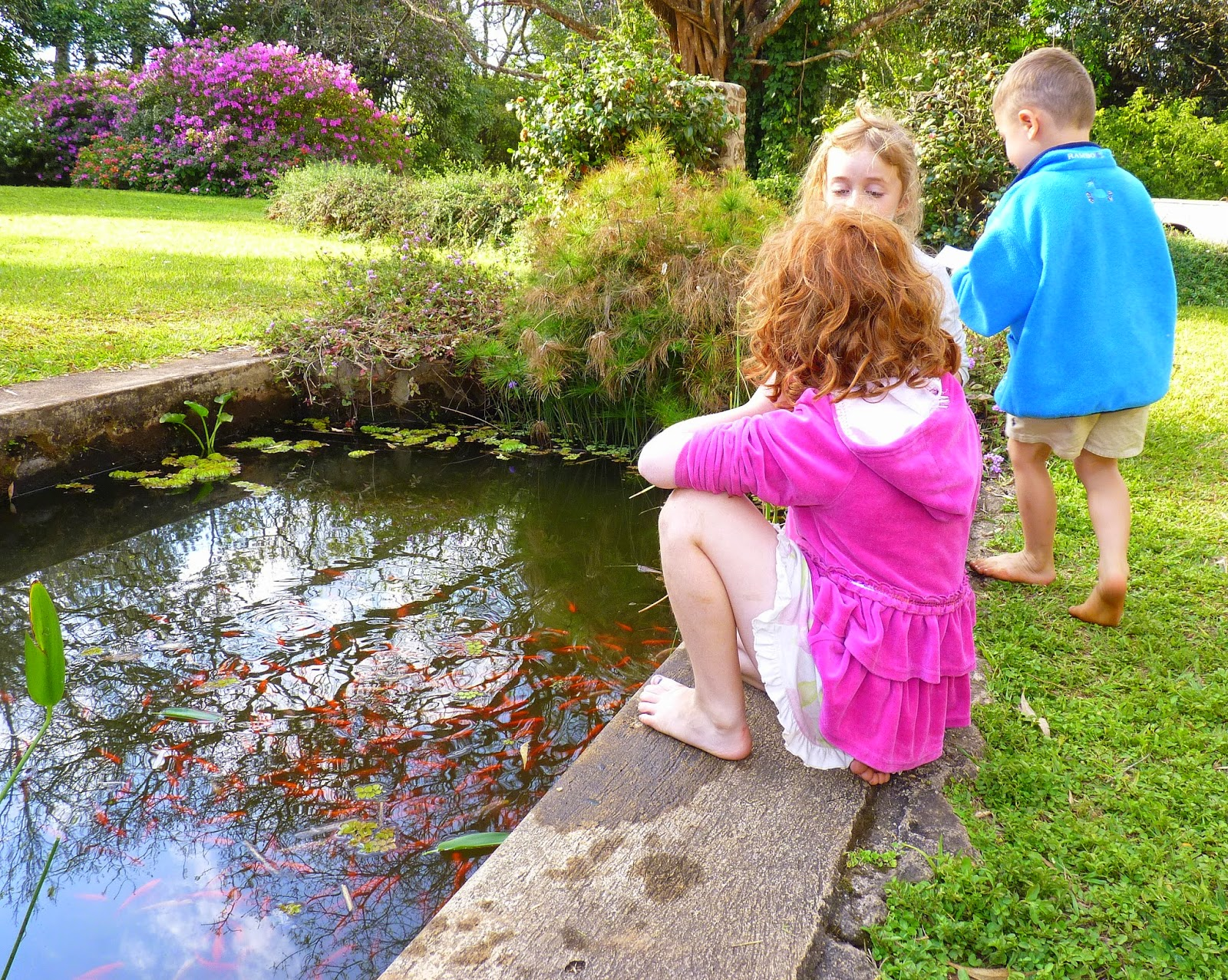 Birding For Pleasure: WEEKEND REFLECTIONS - FISH POND at