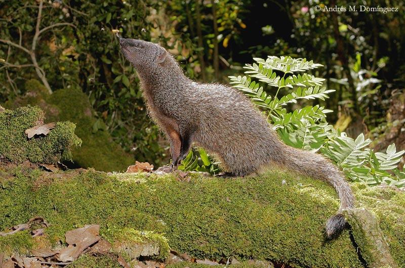 Staten Island Fauna