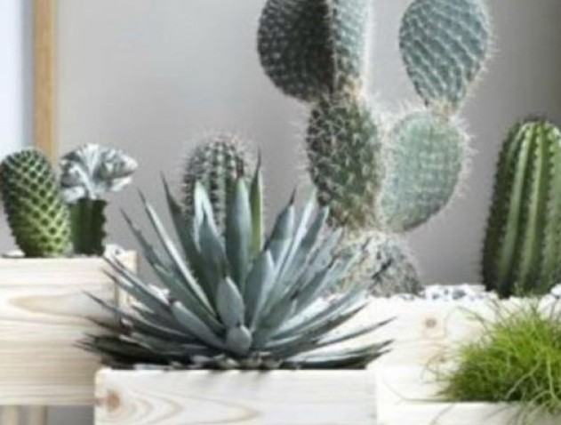 Αυτά είναι τα 8 πιο γρουσούζικα πράγματα που έχετε στο σπίτι σας