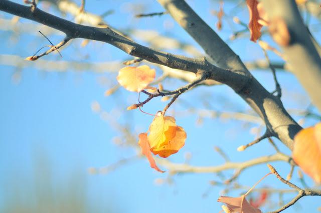 Thơ tình yêu mùa thu, bài thơ tình yêu viết về mùa thu lãng mạn