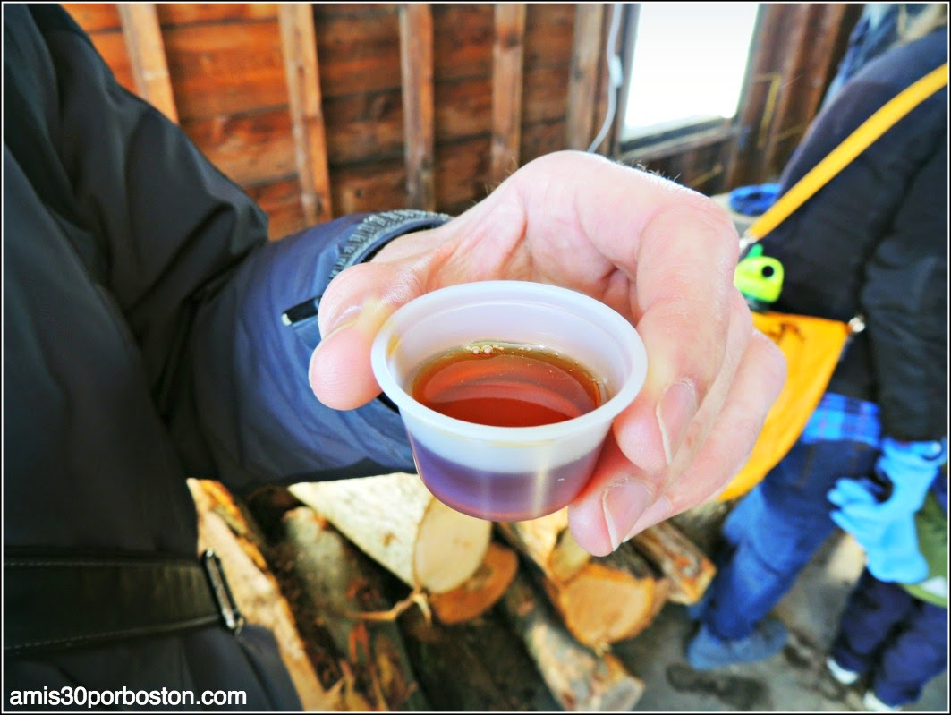 Maple Sugar Season en Massachusetts: Muestra de Jarabe de Arce de Hollis Hills Farm