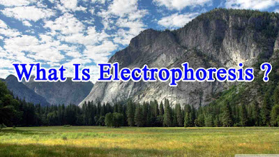 What Is Electrophoresis ?