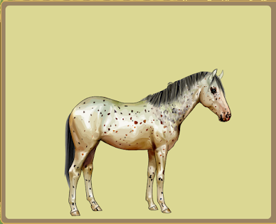 The British Appaloosa