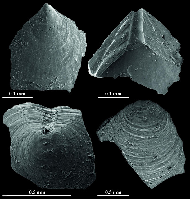 Tiny fossils unlock clues to Earth's climate half a billion years ago
