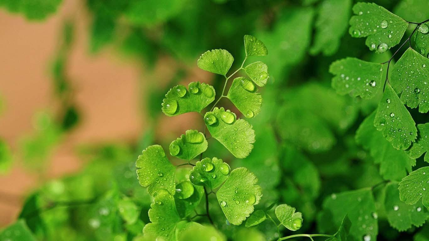 Green Flower Wallpaper