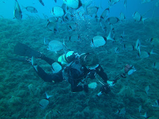 diver with camera surrounded by fish, single tank and bcd, recreational diver