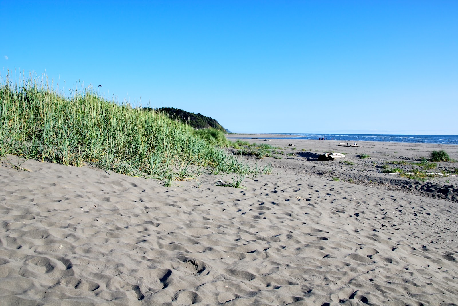 Pacific Beach State Park Campground | Outdoor Project |Pacific Beach State Park