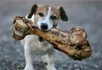 Bueno o malo un hueso para los perros
