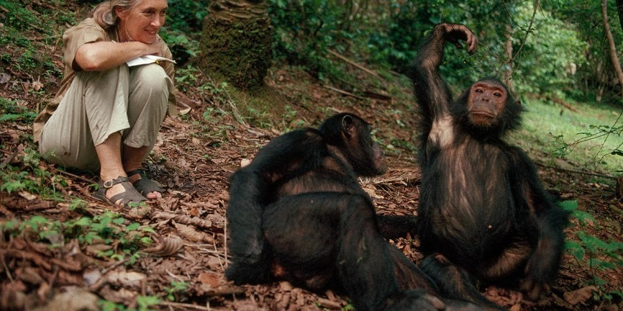 Filme Jane - a Mãe dos Chimpanzés Dublado para download por torrent 1080p 720p Full HD