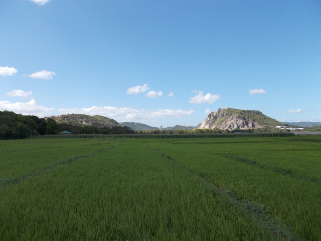Rice farm and Solid Cement factory