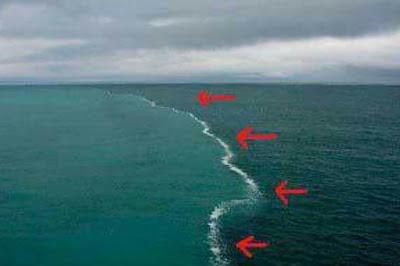 Gara-Gara Laut, Ilmuwan Ini Akhirnya Memeluk Islam