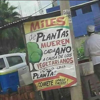 Miles de plantas mueren cada año a causa de los vegetarianos , salva una planta, cómete unos tacos
