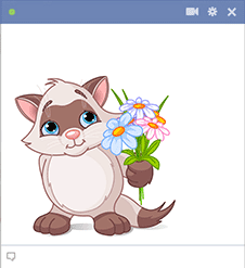 Flowers kitty for Facebook