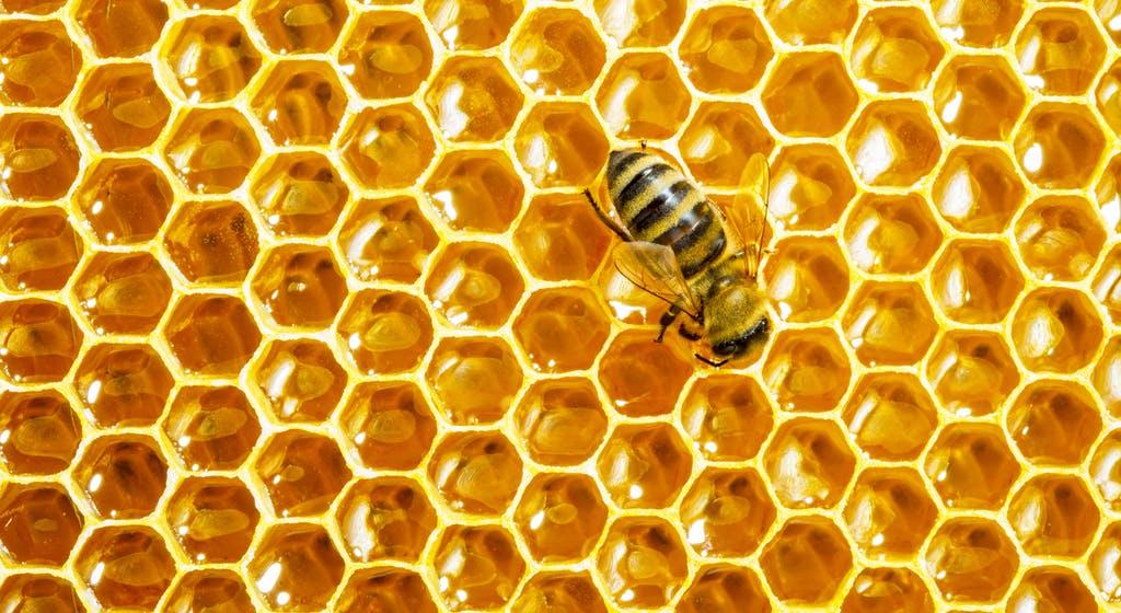 افضل انواع العسل للعلاج https://www.alharif.com
