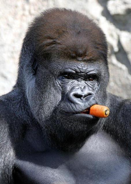 Smoking Gorilla Carrot